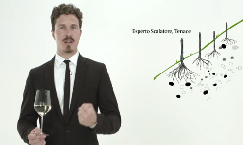 Muller Thurgau Video(3).png