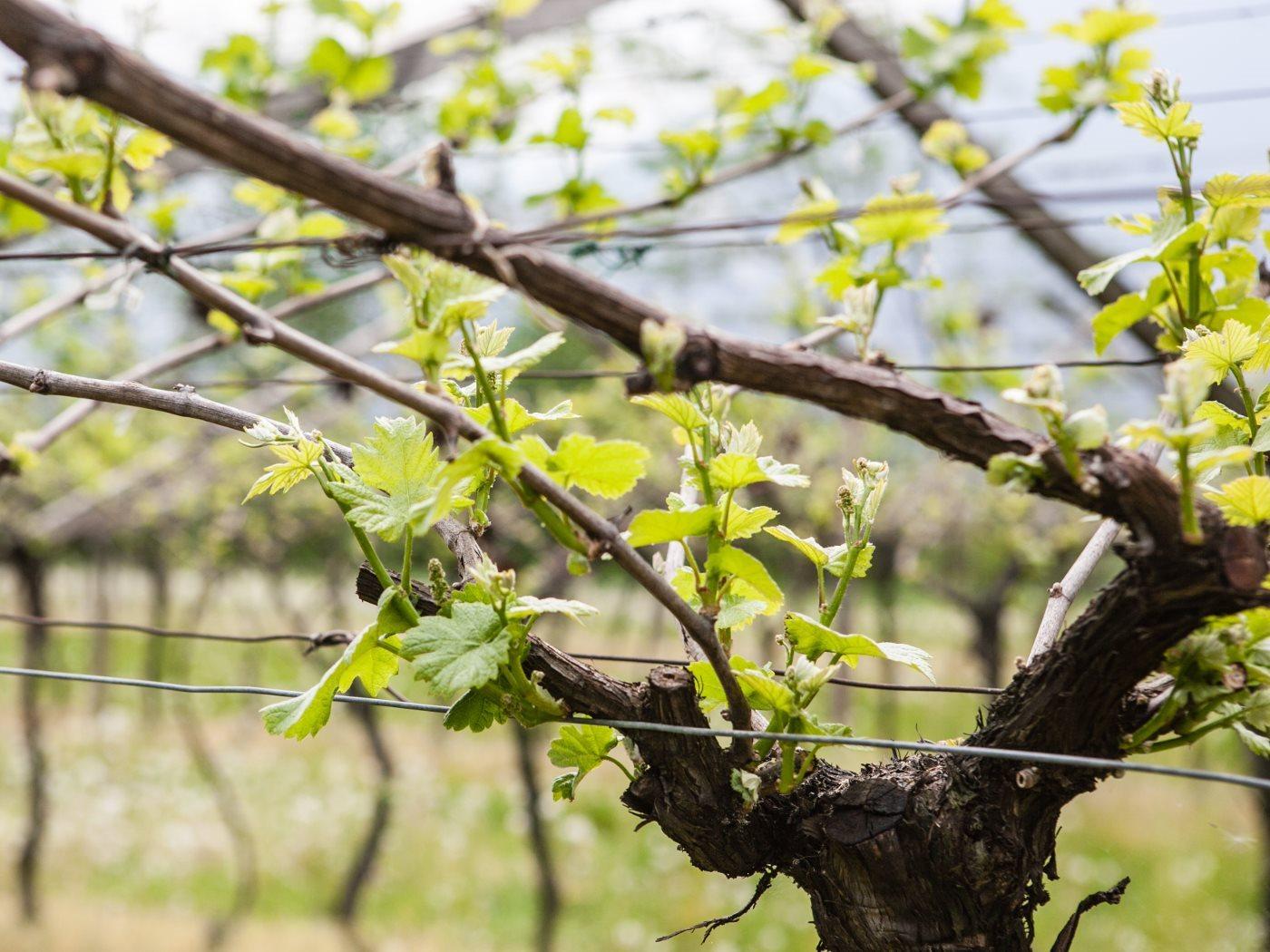 Primavera(0)