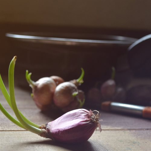 RIBOLLITA_onion_shoots_hires(0)