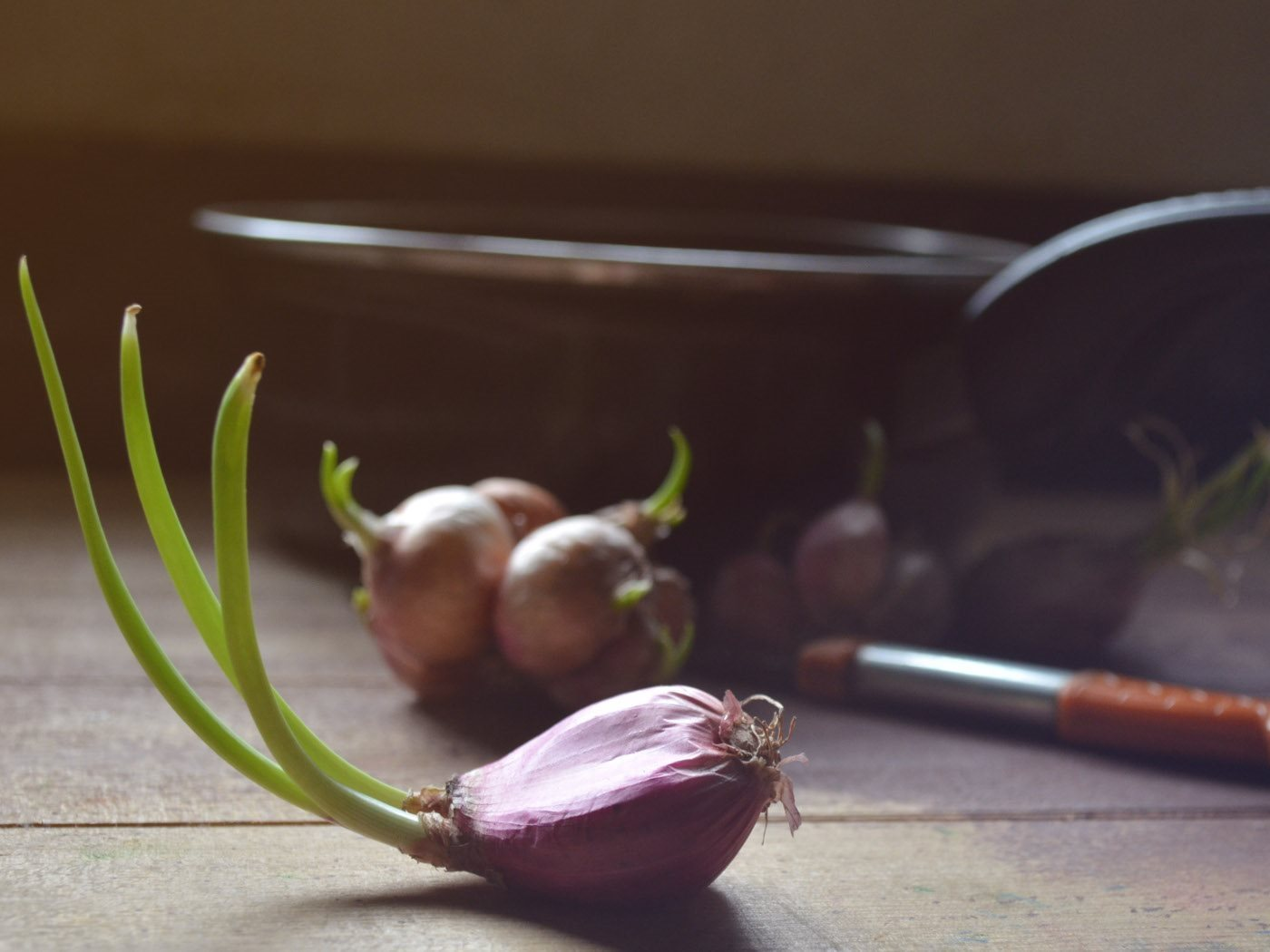 RIBOLLITA_onion_shoots_hires