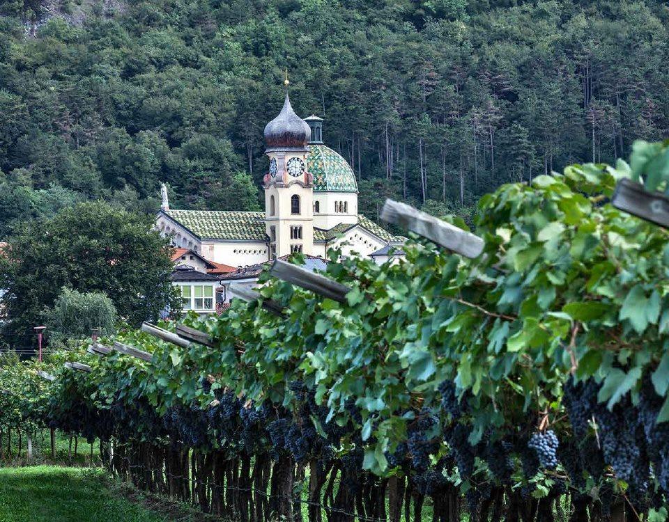 wine-archive-teroldego__04