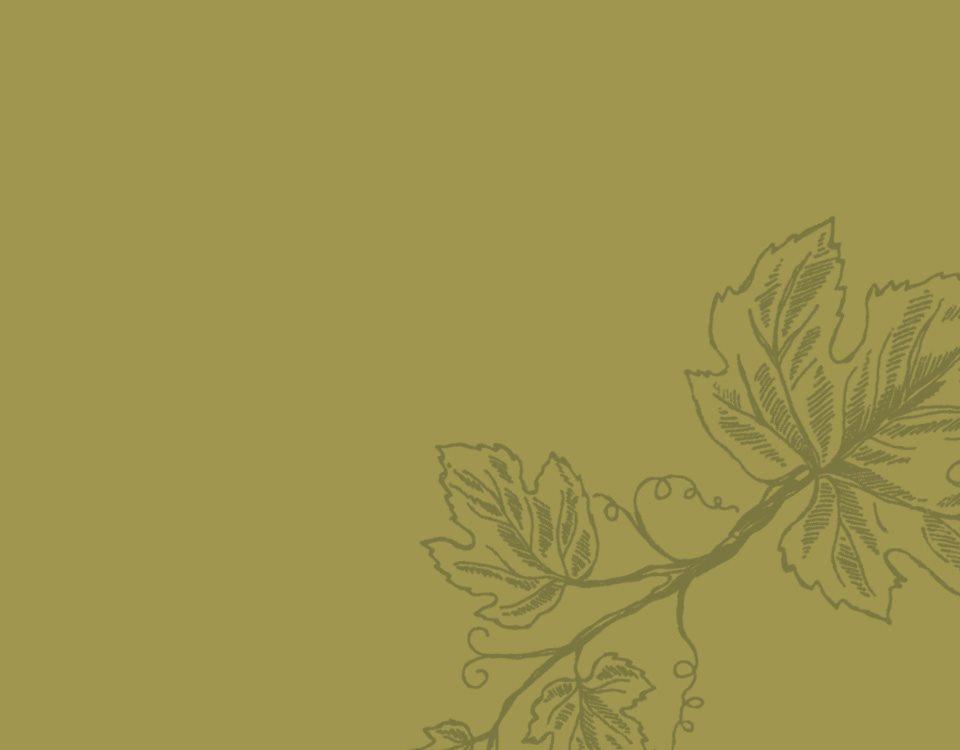 wine-archive-teroldego__05b